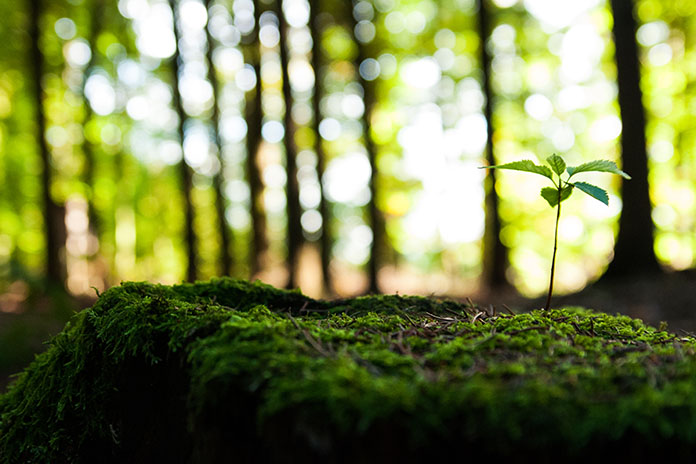 5 Little Things You Can Do To Save Environment